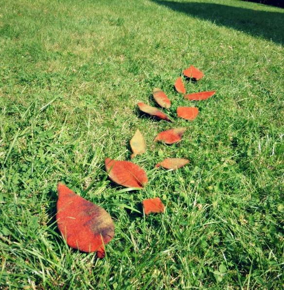 feuilles en laine feutrée